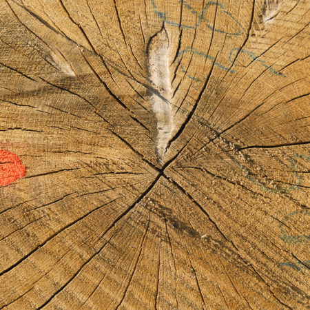 Roter Punkt auf Stirnholz